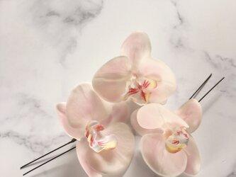 胡蝶蘭 ヘアピンセット pinkの画像