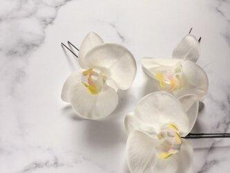 胡蝶蘭 ヘアピンセット whiteの画像