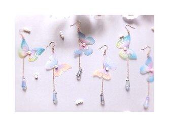 蝶々pierce or earringの画像