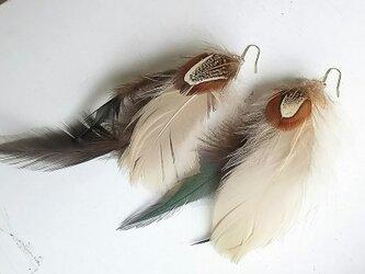 Feather DarkGreen ピアス・イヤリングの画像