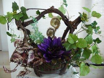 蘭と蔦の花かごの画像