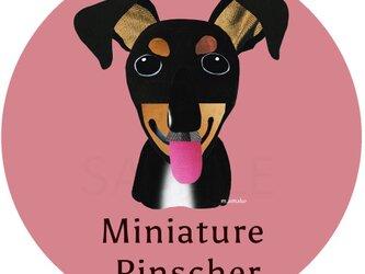 ミニチュア・ピンシャー2《犬種名ステッカー/小型犬》の画像
