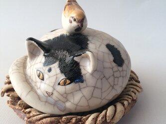 猫の巣?雀の巣?の画像