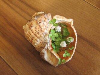 貝がら ミニチュア Green シロツメクサ Sの画像