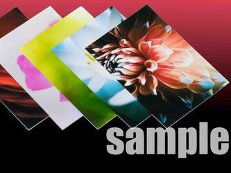 5枚 1セット【750円 送料無料】  草花のアート写真 ポストカードサイズ の画像