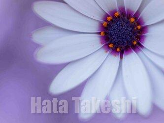 【A-18】A-4サイズ 3枚 1セット 1800円【送料無料】草花のアート写真の画像