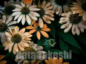 【A-25】A-4サイズ 3枚 1セット 1800円【送料無料】草花のアート写真の画像
