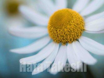 【A-55】A-4サイズ 3枚 1セット 1800円【送料無料】草花のアート写真の画像