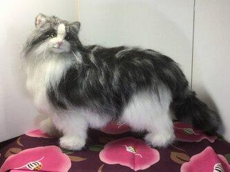 羊毛フェルト21cm:オーダーメイドの猫人形(植毛、ストレート)の画像