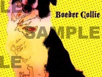 ボーダーコリーのイラストポストカード/同柄2枚組の画像