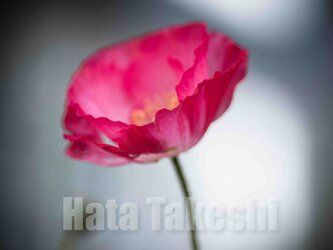 【A-61】A-4サイズ 3枚 1セット 1800円【送料無料】草花のアート写真の画像