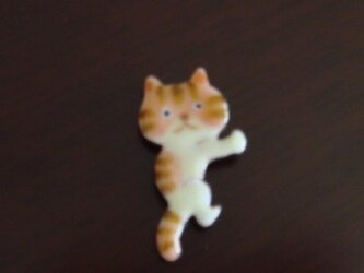 七宝 シッカと離さない猫の画像