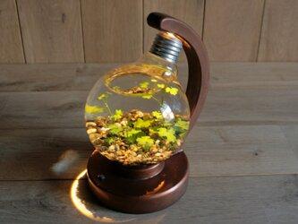 bulb terrarium ball [warm]の画像
