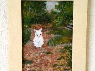 白い猫(原画)の画像