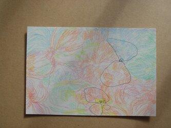 蝶たちの画像