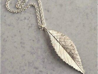 Elm leaf necklace {P078SV}の画像