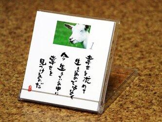 日めくりカレンダー (動物写真編)の画像