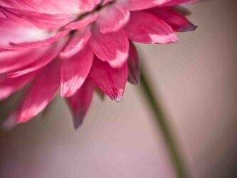 【A-66】A-4サイズ 3枚 1セット 1800円【送料無料】草花のアート写真の画像
