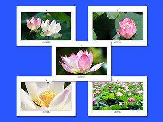 「蓮」ポストカード5枚組の画像