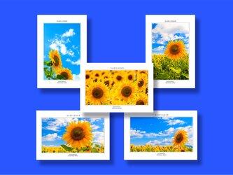 「ひまわり」ポストカード5枚組の画像