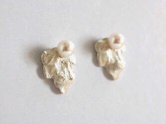 【あこや真珠シルバーピアス リーフ l】の画像