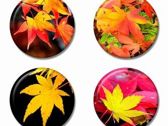 「紅葉」缶バッジ 4個セット Aの画像