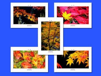 「紅葉」ポストカード5枚組の画像