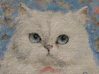 ホワイト・ペルシャの画像