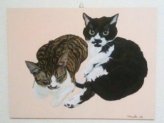 いっしょに猫(マルコとはっち)の画像