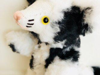 シャトン・オレオ 子猫のぬいぐるみ ギフト クリスマス X'mas プレゼントの画像