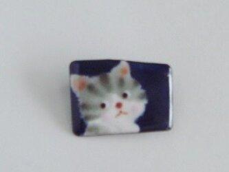 七宝 名前を呼ばれた縞猫の画像