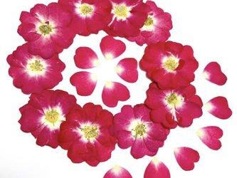 ミニバラの押し花10輪の画像