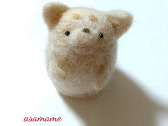 つぶらな瞳のかわいい柴犬さん ホワイトベージュの画像