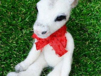 Xmas Beby reindeer(ベビー トナカイ)の画像