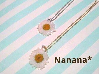 Flower*ノースポールのネックレスの画像