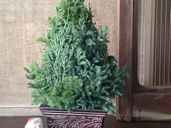 フレッシュクグリーンのリスマスツリーの画像
