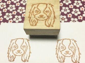 愛犬はんこ【キャバリアキング】2.5×2.5㎝四方の画像