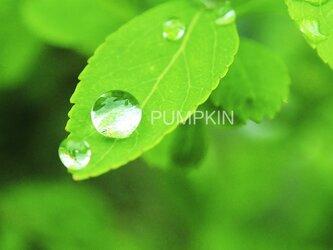 しずく-No-6  PH-A4-0138 写真 雫 雨 水滴 雨つぶ 小雨 光 水玉の画像