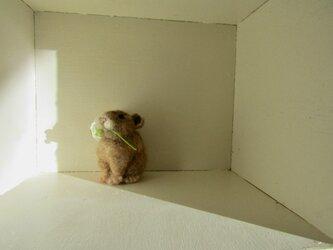 ナキウサギ (白茶)の画像