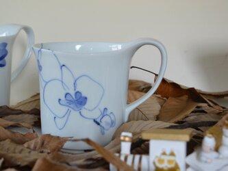 胡蝶蘭 たっぷり300㏄マグ の画像