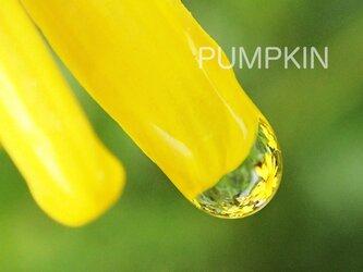 しずく-No-8  PH-A4-0140 写真 雫 雨 水滴 雨つぶ 小雨 光 水玉の画像