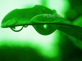 しずく-No-9  PH-A4-0141   写真 雫 雨 水滴 雨つぶ 小雨 光 水玉の画像