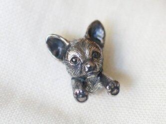 チワワの犬ピンブローチの画像