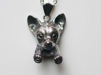 チワワの犬ネックレスの画像