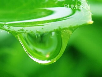 しずく-No-11  PH-A4-0143   写真 雫 雨 水滴 雨つぶ 小雨 光 水玉の画像