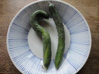染付十草の24㎝の深めのお皿の画像