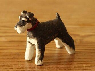 干支の犬 ミニチュアシュナウザー/BSの画像