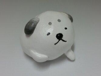 小さな子犬 黒豆の画像