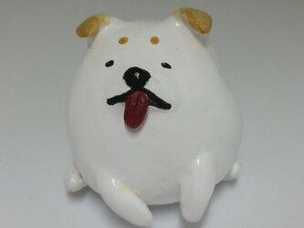 小さな子犬 豆茶の画像