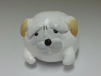 小さな子犬 茶垂の画像